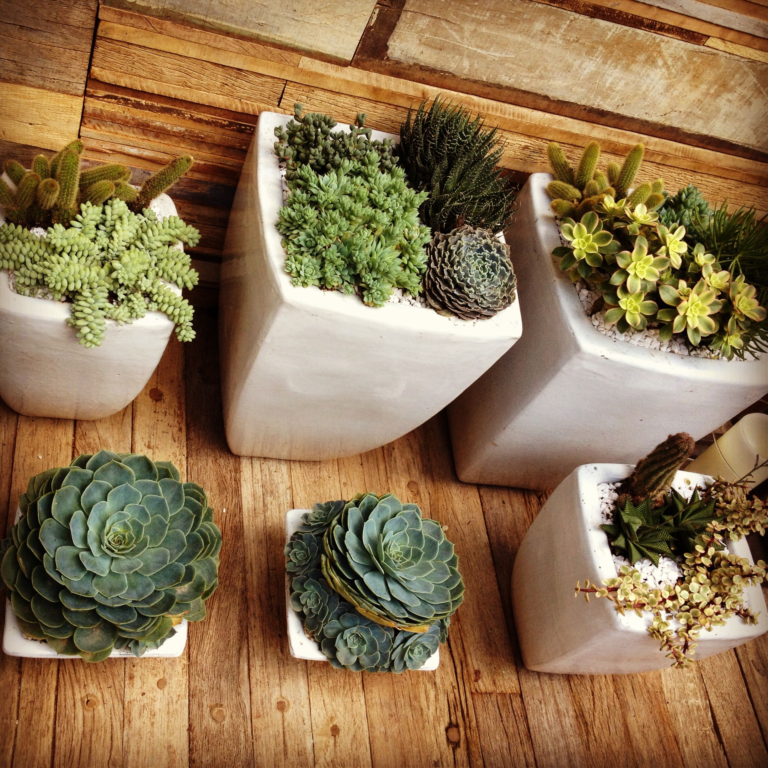 1000 Images About My Desert Balcony Garden On Pinterest