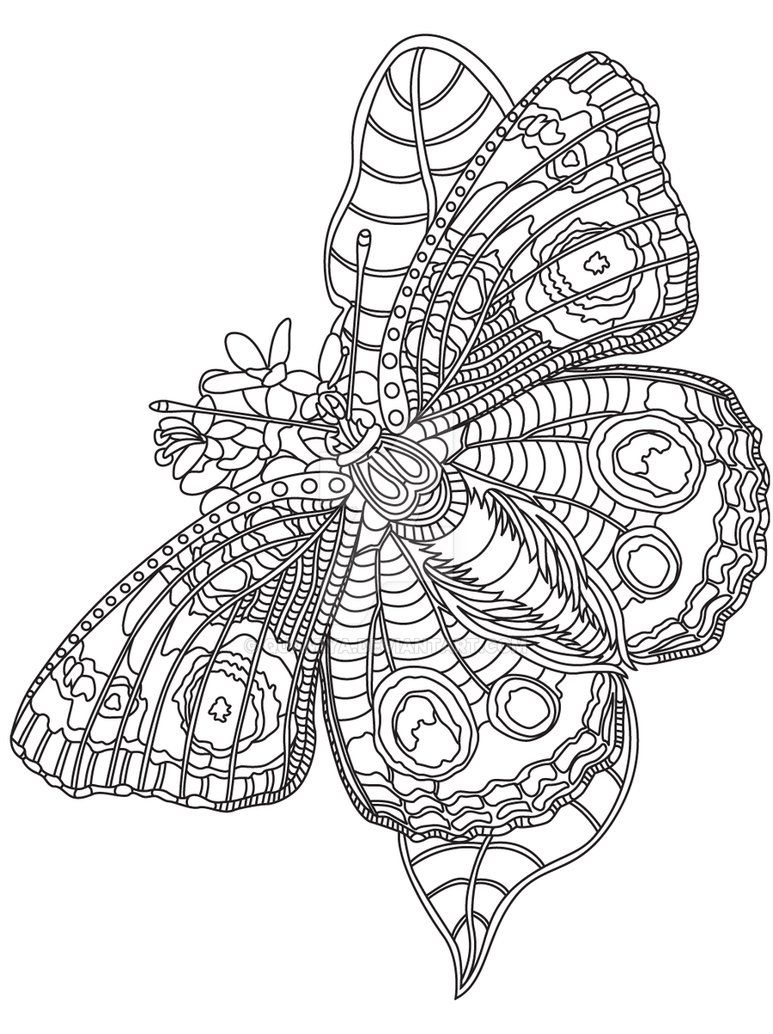 Gst Kolorowanka Motyle 08 Por Quamiya Insect Coloring Pages Butterfly Drawing Coloring Books