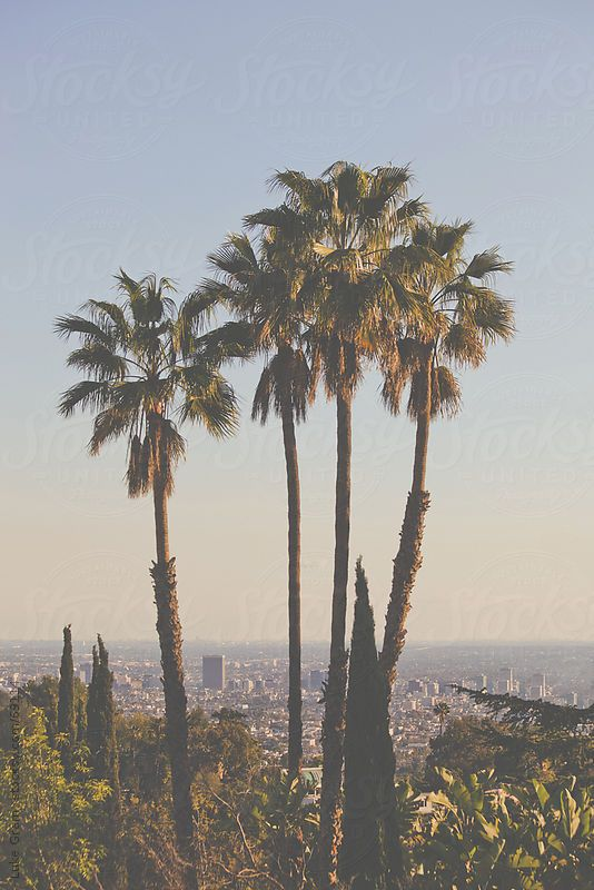 Los Angeles California Wallpaper California Love Palm Trees