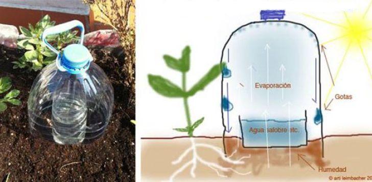 Cómo Crear Tu Propio Sistema De Riego Que Te Ayudará A Ahorrar Agua Water Bottle Solar Water Irrigation