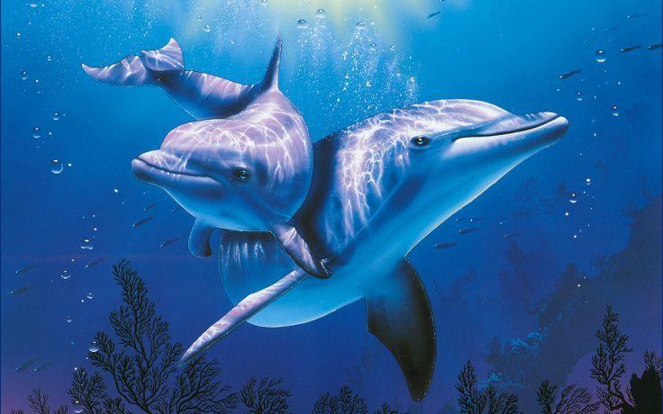 dolphins underwater ocean sea wallpaper background