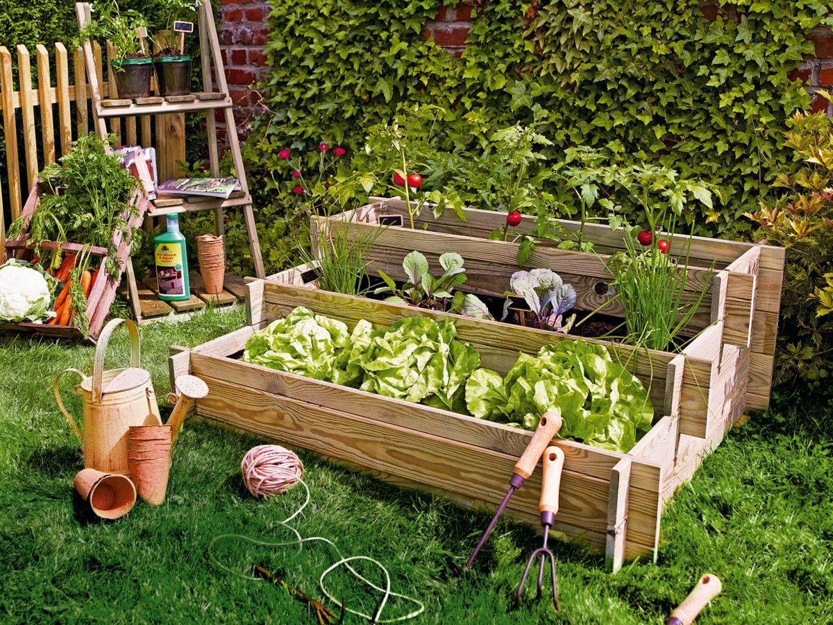 Cultivar tus propias hortalizas y verduras es un pequeño placer que te  puedes permitir. Es el momento idóneo … | Como hacer un huerto, Huerto en  casa, Huerto casero