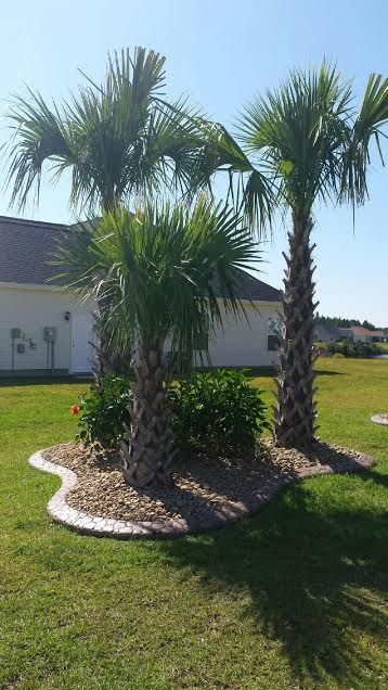 Palmetto Trees Hibiscus Amp River Rock Landscaping