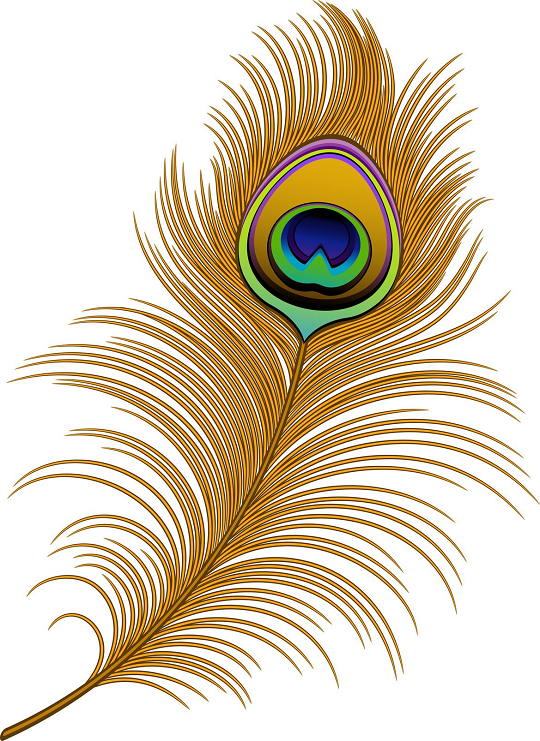 Vector Peacock Feather Clip Art Peacock Feather Art Feather Clip Art Feather Art