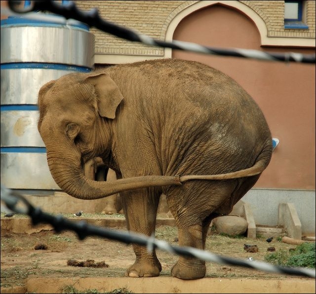 lonely elephant - Google Search