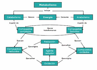 Aprende la forma en que curé mi Cómo aumentar el metabolismo en 2 días