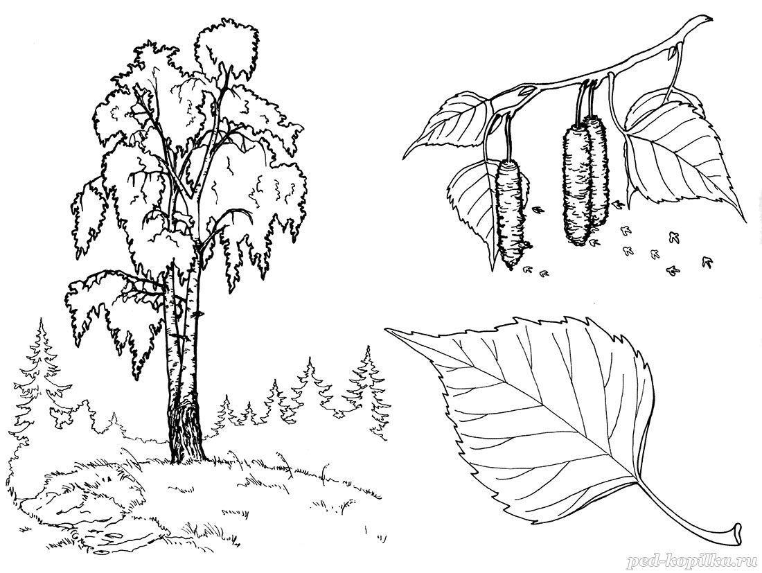 раскраски по теме деревья для детей распечатать бесплатно