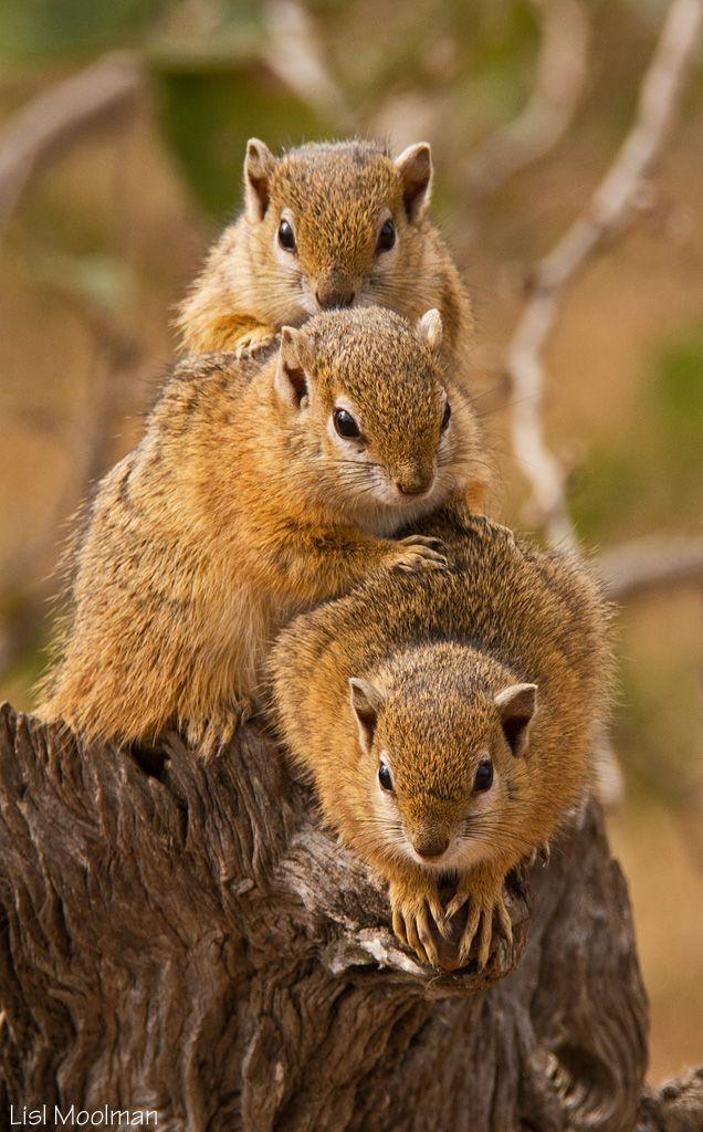 Squirrel Family Portrait by Lisl Moolman