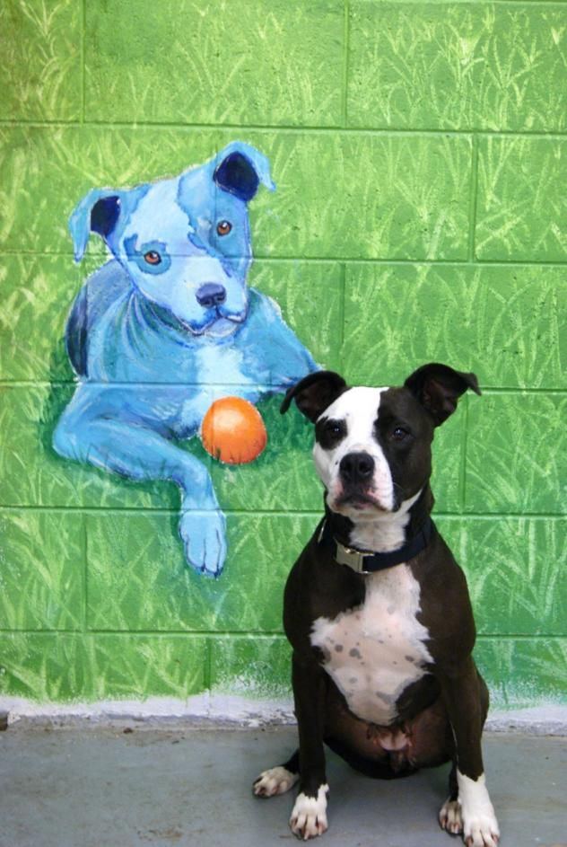 Adopt Natty On Pitbull Terrier Terrier Mix Dogs Dogs