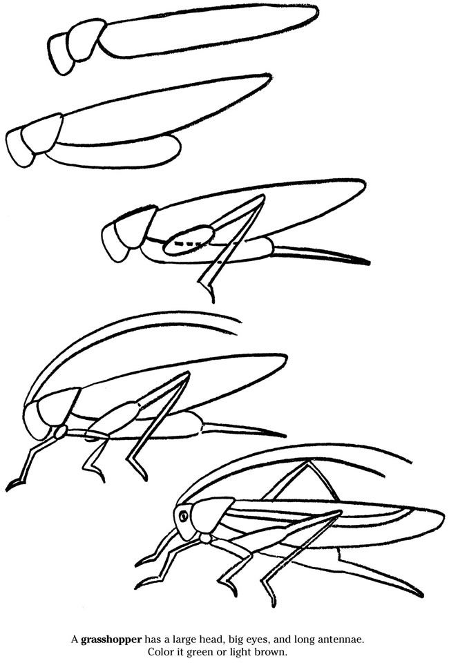 How to draw a grasshopper   Easy drawings, Bug art, Art ...