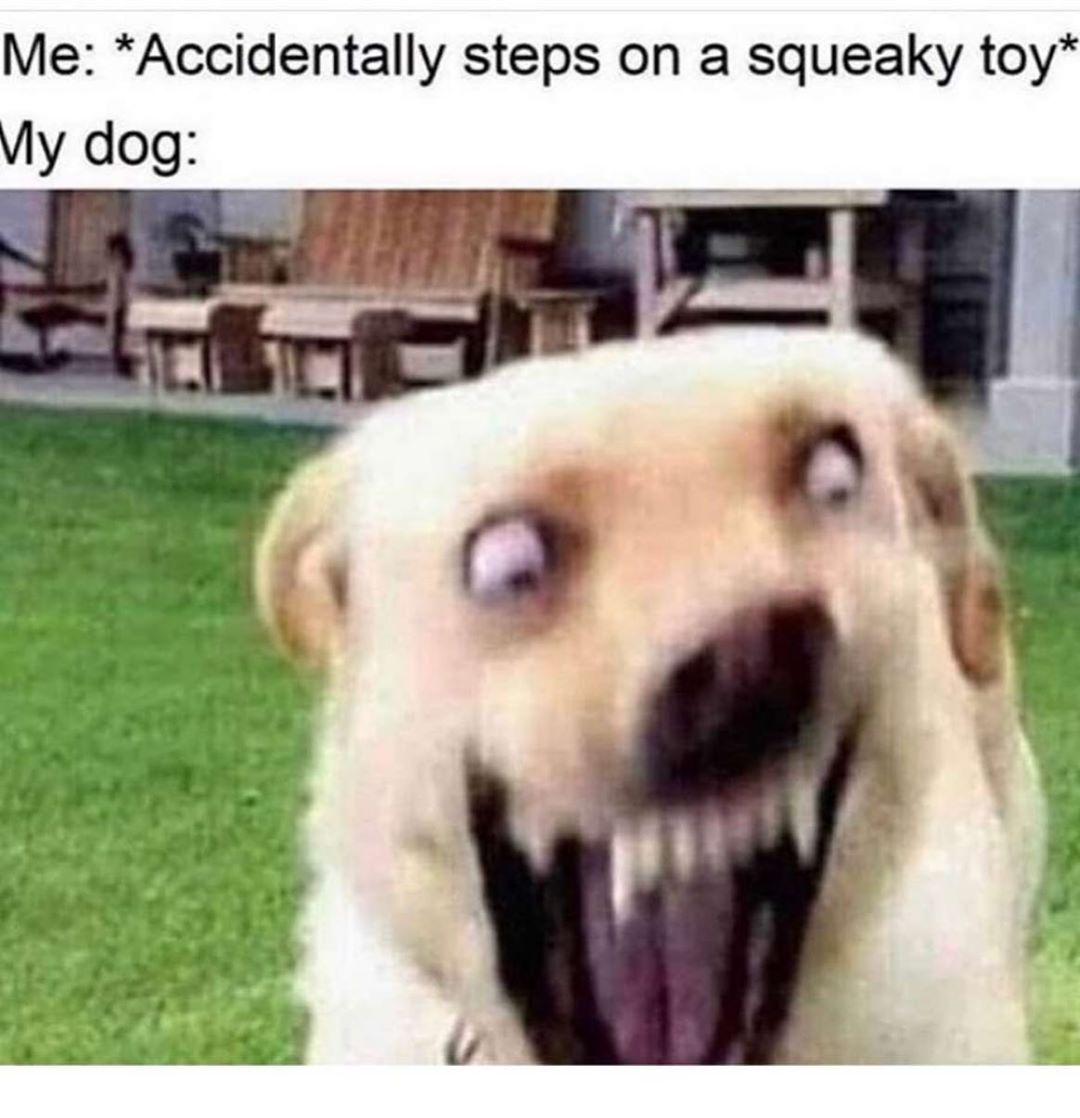 Tumblr Funny Animal Quotes Funny Animal Jokes Funny Dog Memes