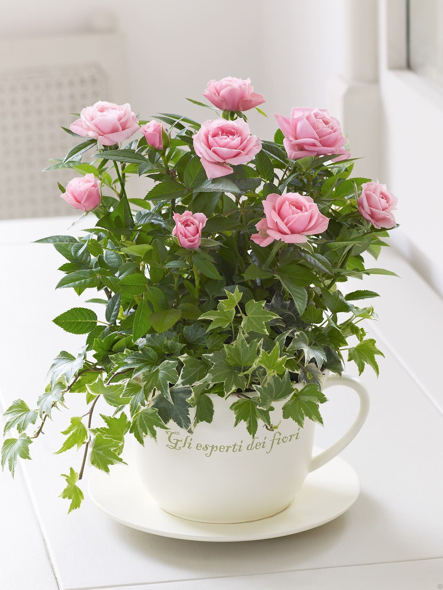 Could Place Miniture Rose In Pot In Cup Then Add Greenery