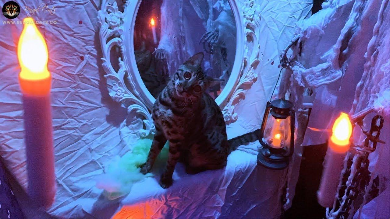 Spooktacular Halloween Video With Bengal Cat Bengal Cat Halloween Haunted Houses Halloween Gif