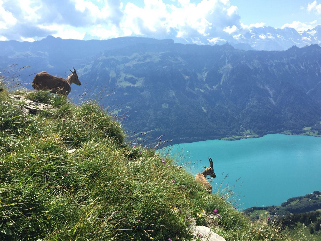 #Switzerland #Brienzersee #Augstmatthorn #hiking #home