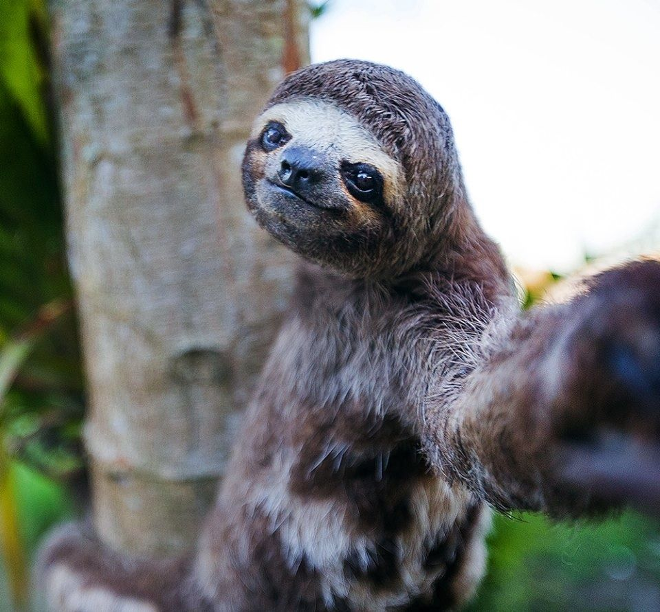 Sloth selfie. Slothie? Can't stop laughing at this for