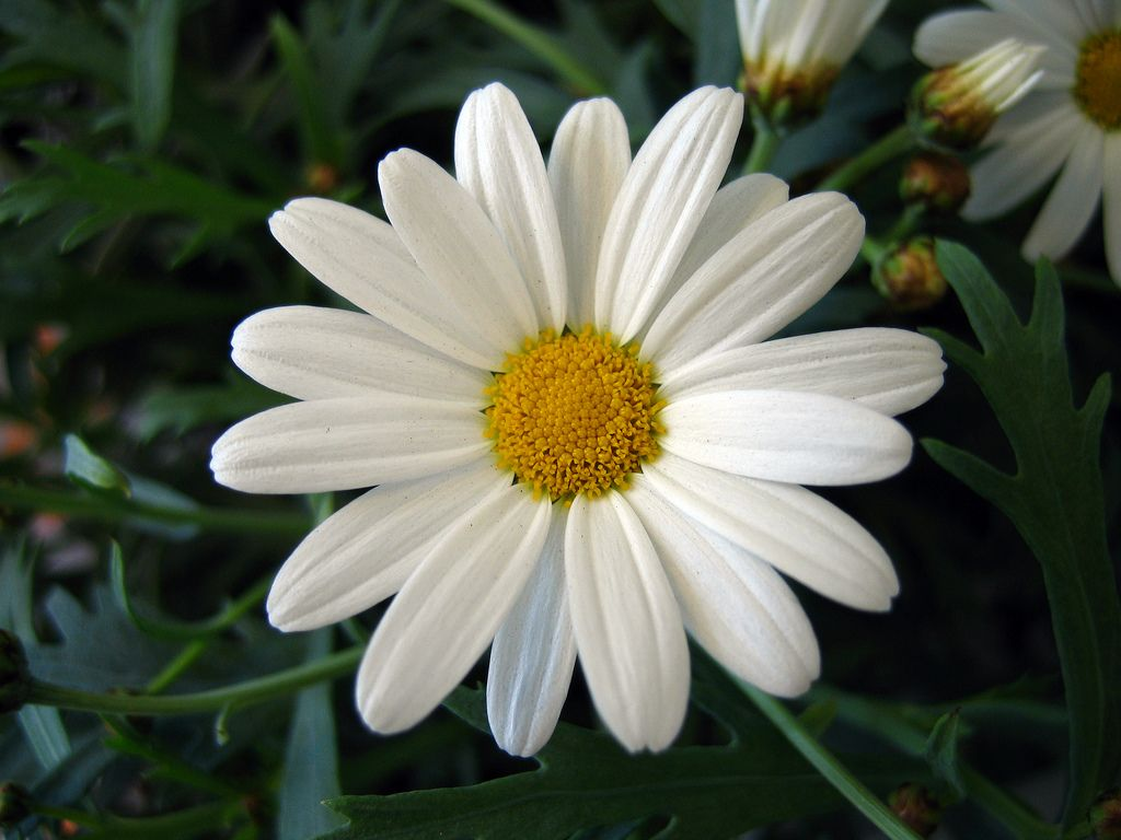 Wordsworths to the daisy with little here flowers in the poem to the daisy with little here wordsworth is discussing the greater significance the daisy is to man kind then the material world could ever izmirmasajfo