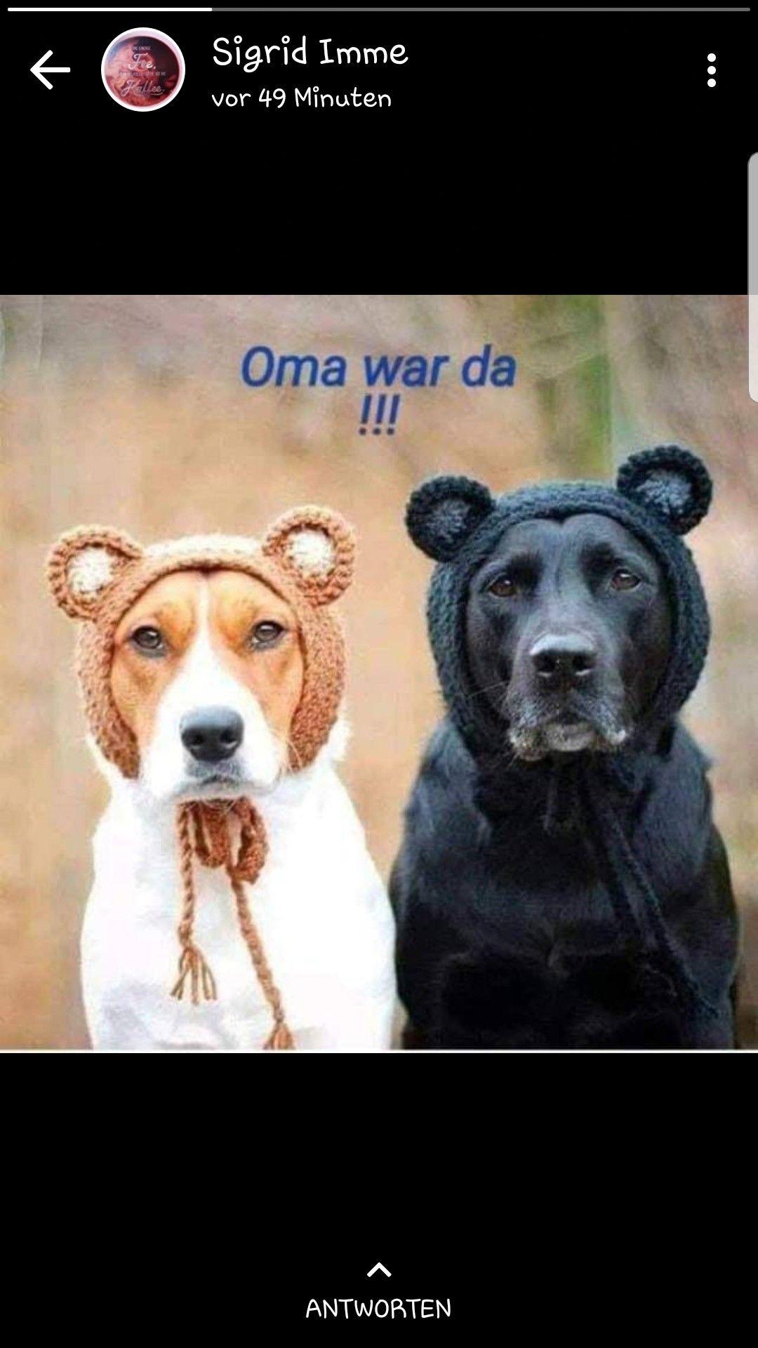 Lustige Hunde Sprüche
