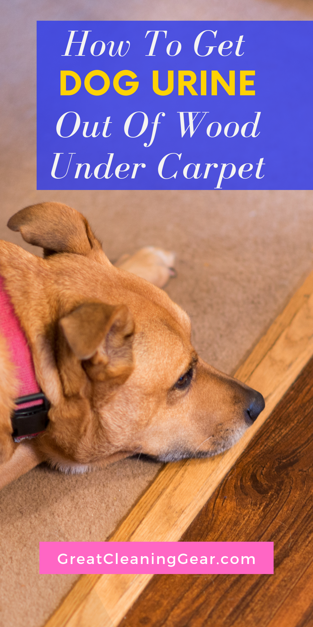 Cleaning Dog Urine Out Of Wood Floors