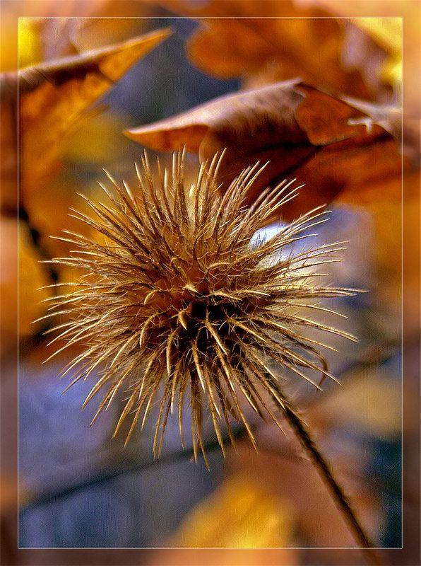 Красивые цветы фото хорошего качества   Цветы, Красивые ...
