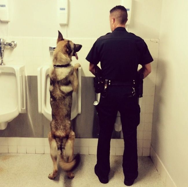 police k9 at urinal Law Enforcement Pinterest Dog, Police - canine security officer sample resume