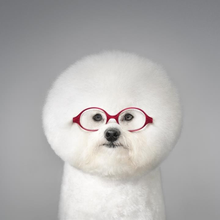30 Recently Popular Files Cute Animals Animals Cute Creatures