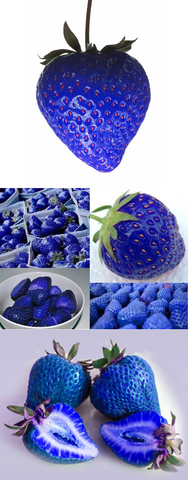 500Pcs Blue Strawberry Rare Fruit Seeds Bonsai Edible 400 x 300