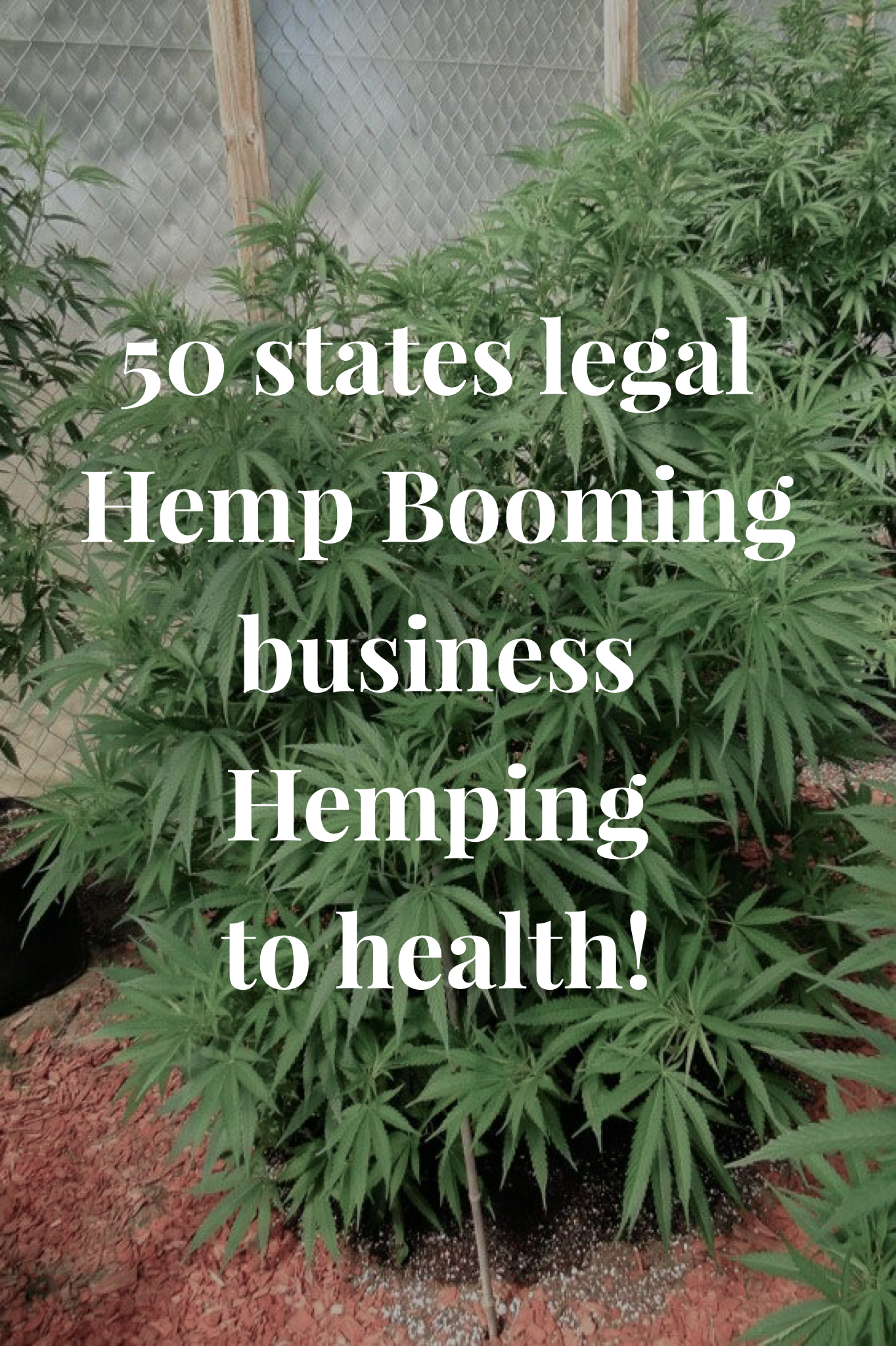Selling legal hemp from home! Averaging 20k in Sales a month