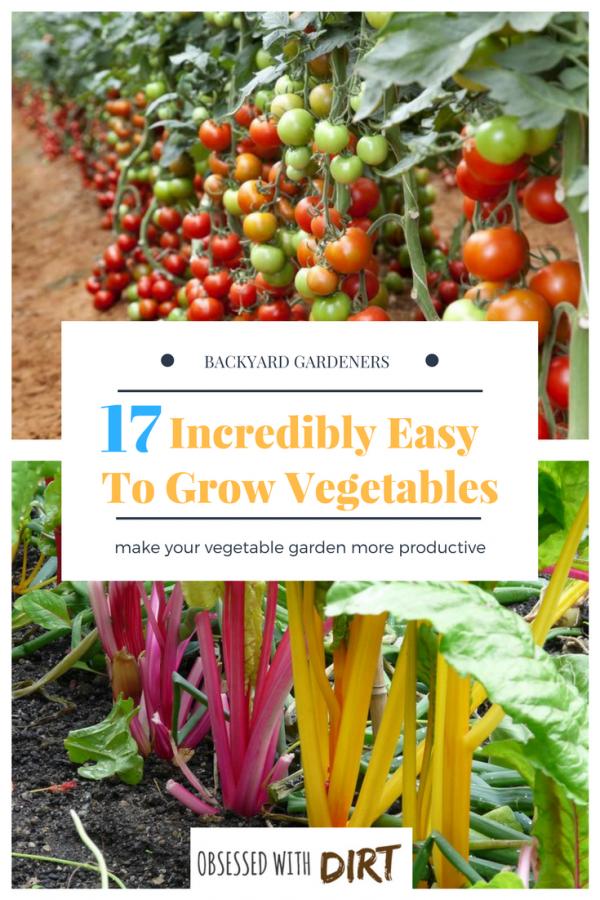 17 Easy To Grow Vegetable Garden Plants For Beginner 640 x 480