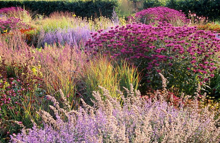 Scampston hall uk perennial meadow design piet oudolf for Piet oudolf pflanzen
