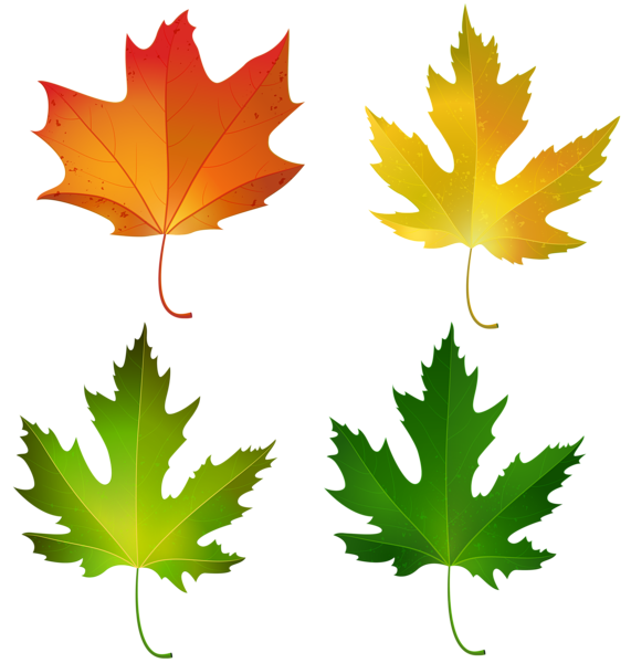Fall Maple Leaves Set Png Decorative Clipart Image Clipart