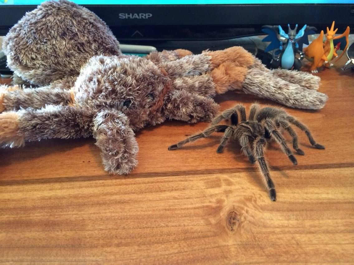 Pin on Stuffies Spiders