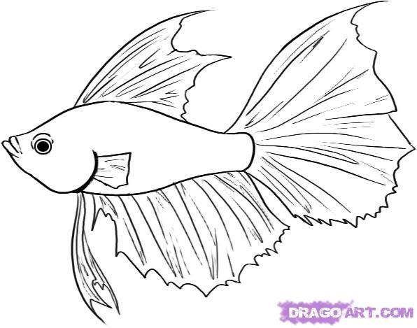 how to draw a betta fish step 4 | Fish Tank Assorted | Pinterest