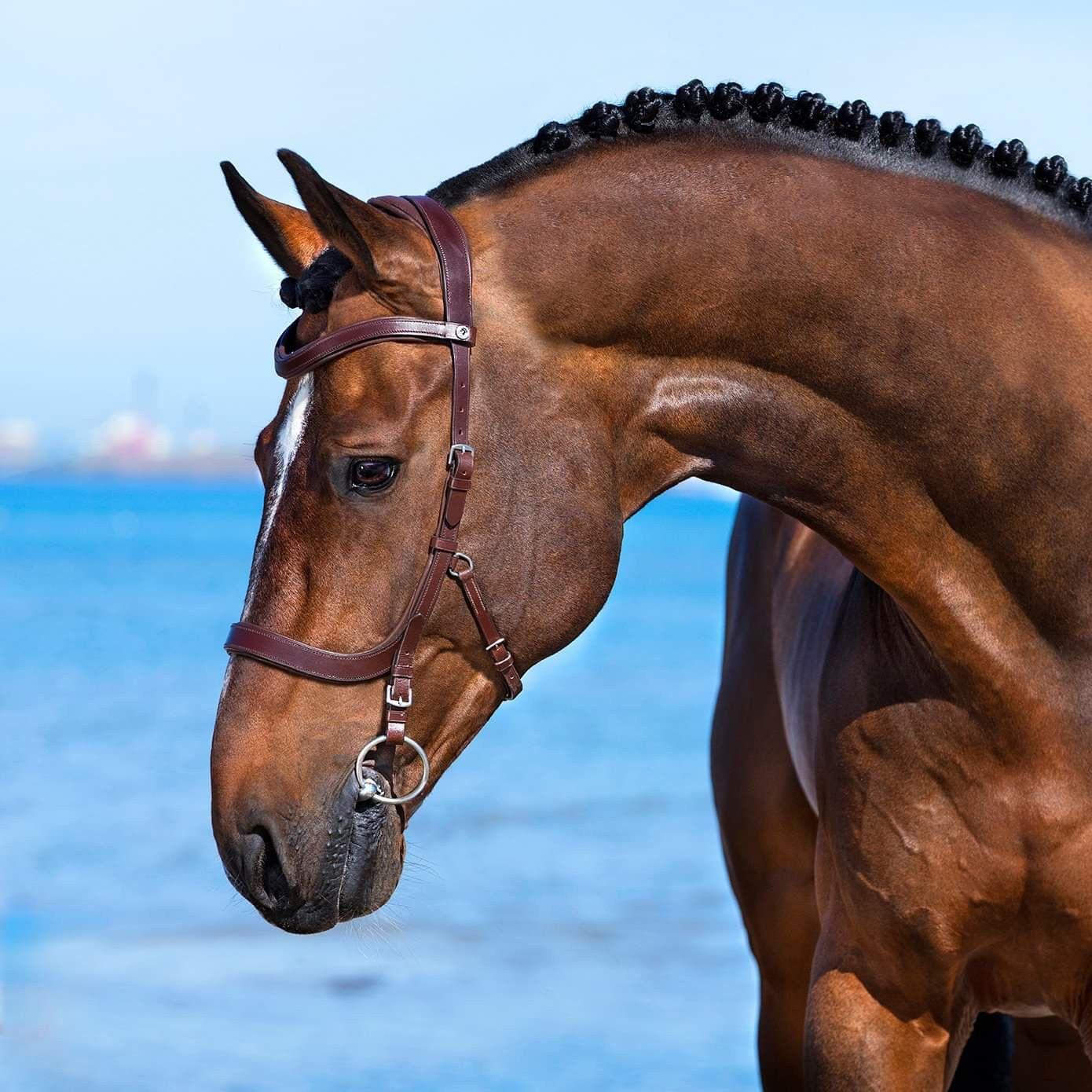 Pin van Ellenradius op paard   Paarden