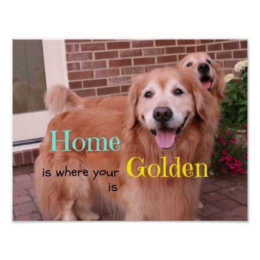 Golden Retriever Quotes And Sayings Quotesgram Golden Retriever
