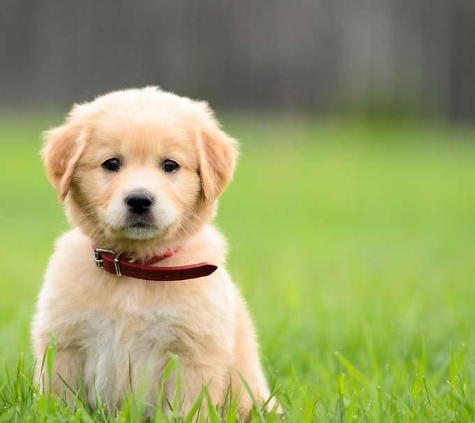 """If you text """"puppy"""" to (214)460-5328 the number will send you a cute picture of a puppy."""