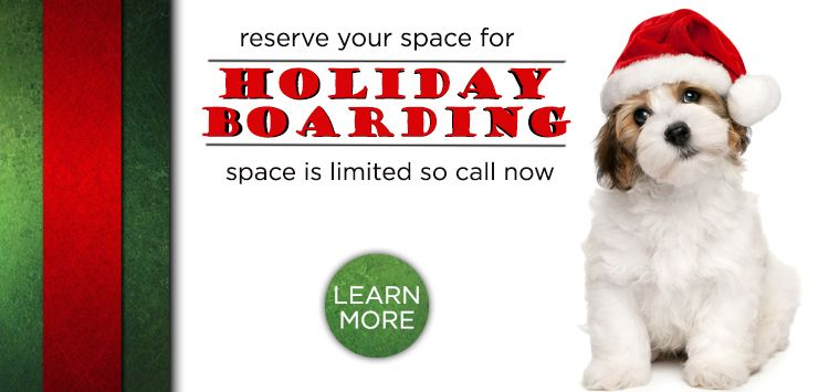 Houston Dog Training Doggie Daycare Houston Dog Cat Boarding