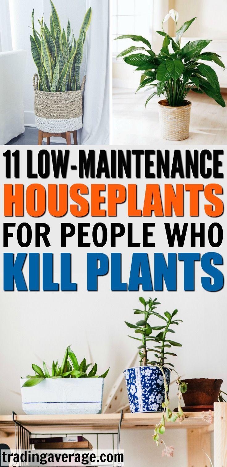 11 Houseplants That Don T Need A Lot Of Sunlight To Grow Plants Indoor Garden Indoor Plants