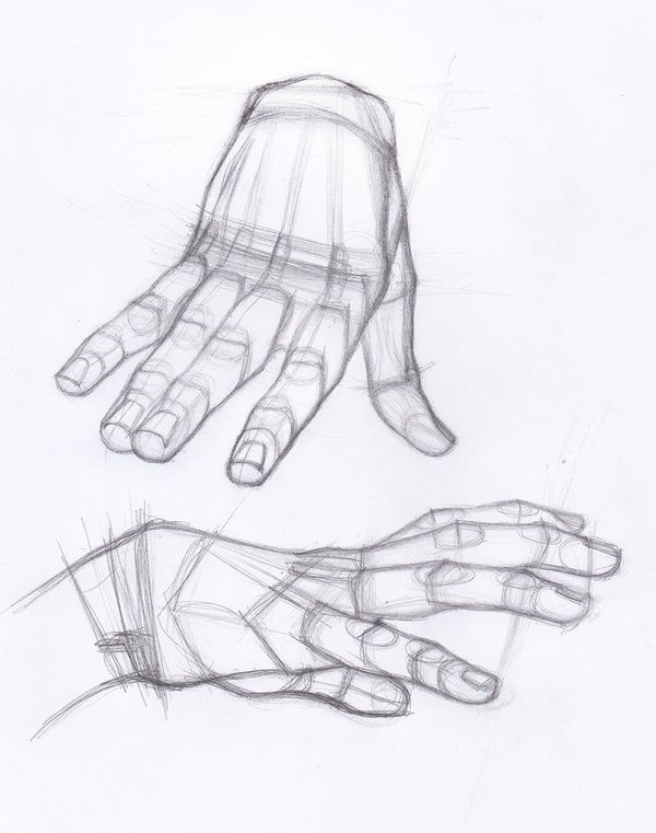 Pin by Hilda Sanchez on Academic Drawing | Pinterest | Anatomy ...