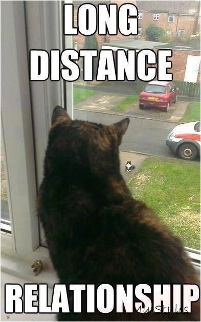 Funniest Cat Memes for 2020  #kittens  #meow  #kitten  #kitty  #cute  #love #pet  #catlife #good #jokes