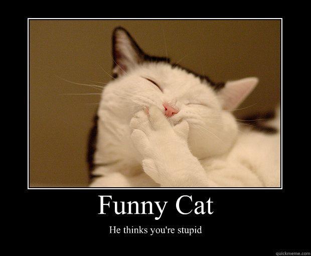 Cat humor Hilarious!! ( Pinterest Funny cats, Cute