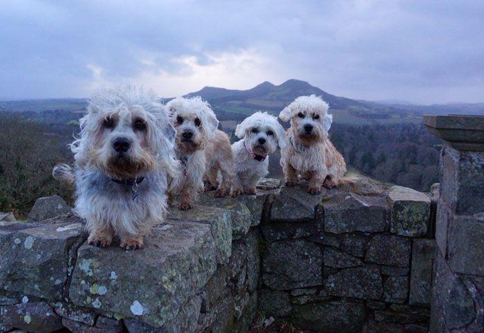 Dandies At Scott S View Scottish Borders On 200th Anniversary Of