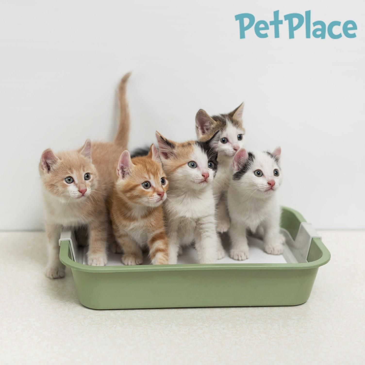 Can cleaning out the litter box put you at risk for health