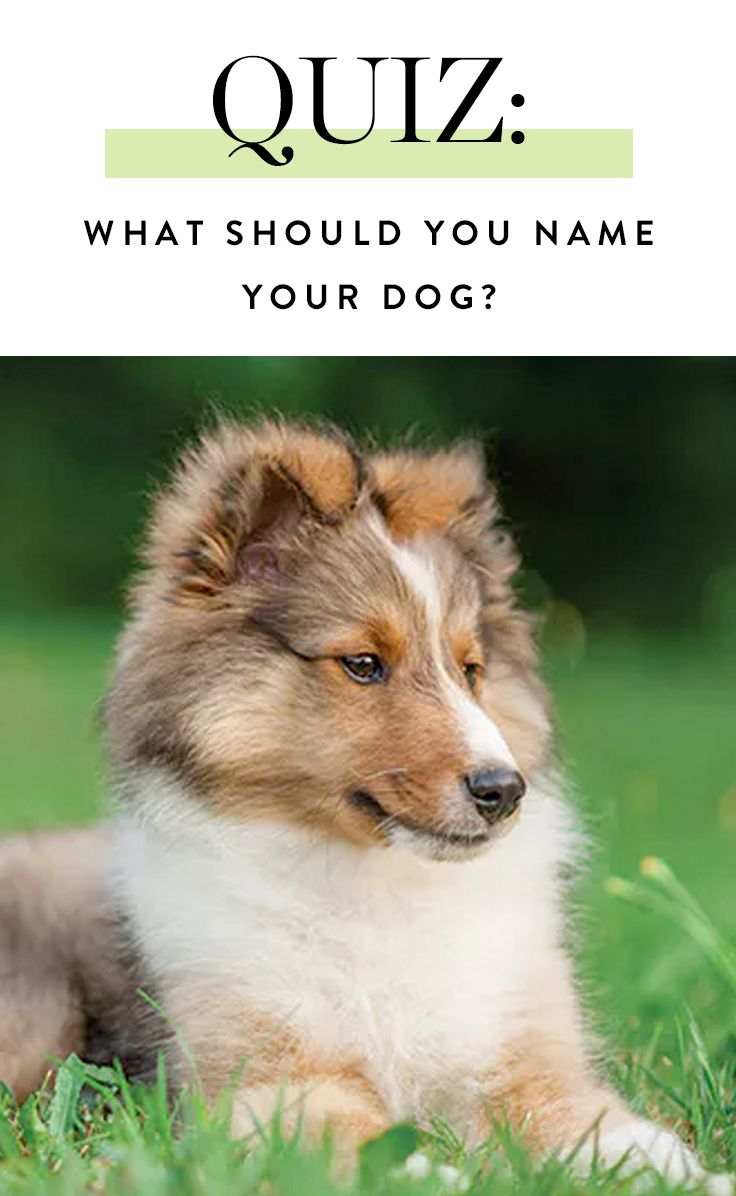 What Should You Name Your Dog Dog Quizzes Your Dog Dogs