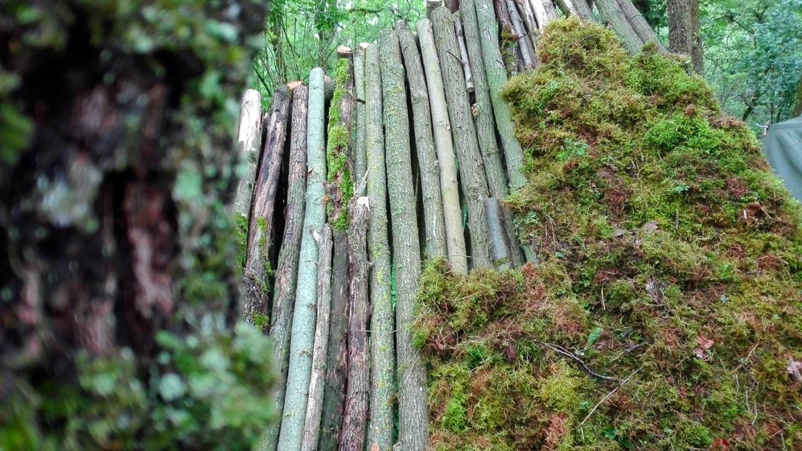 Abri Mousse En Construction Moos Shelter Abris Et Couchages  # Abris De Jardin Amberieu