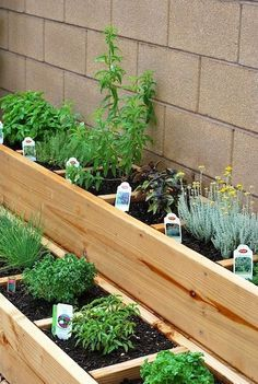 I love that this herb garden has a separate section for each herb.