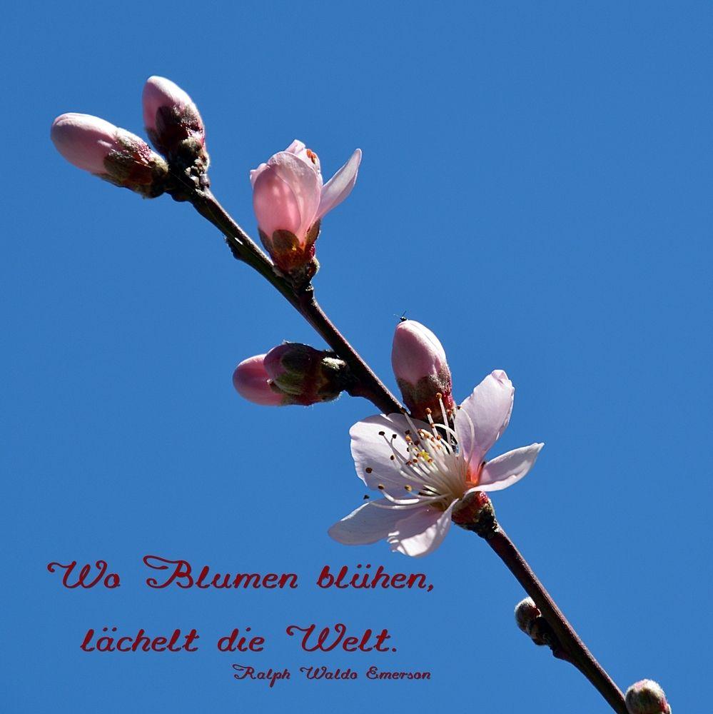 Wo Blumen blühen ... von Marmia | Sprüche | Blumen zitate ...