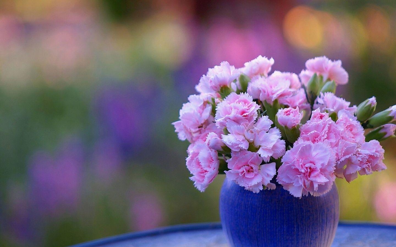 Картинка гвоздика в вазе