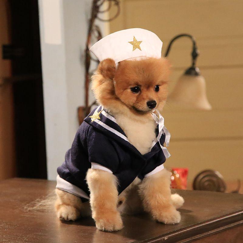 Sailor pup HotinCleveland Cute animals, Boo the dog, I