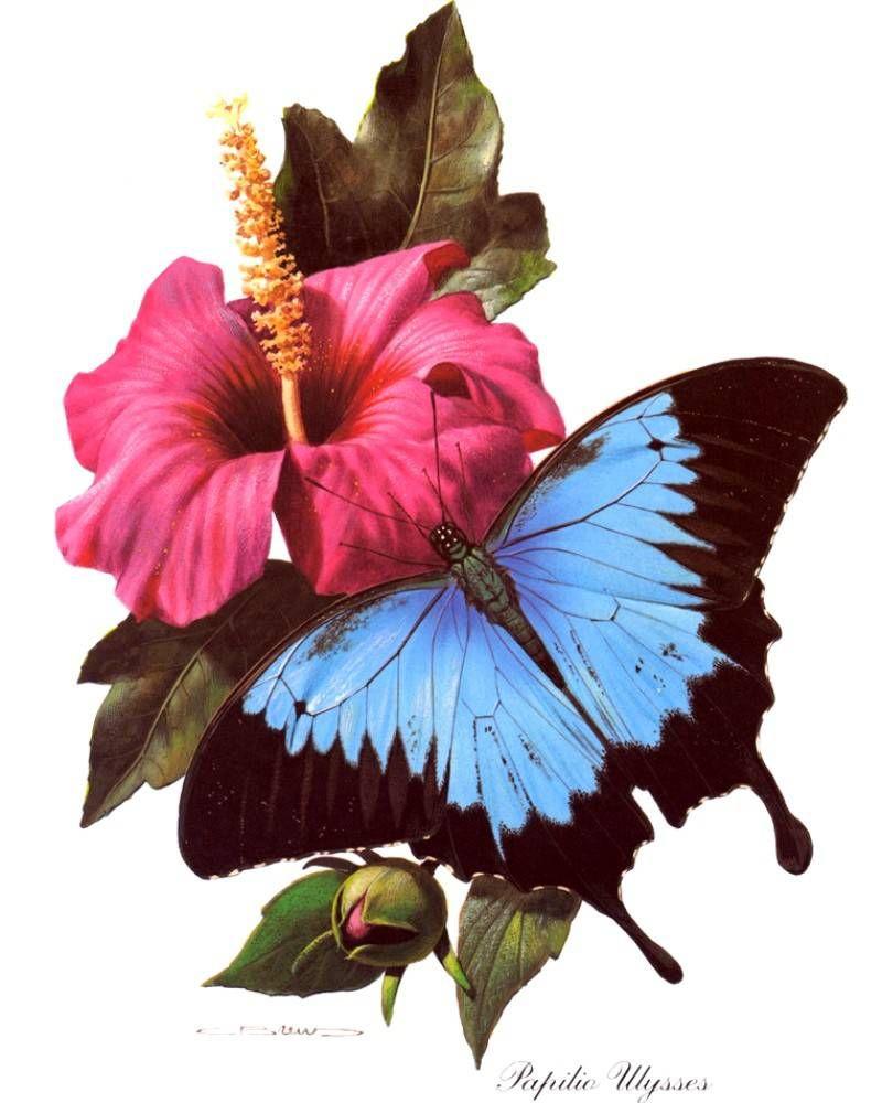 Цветные рисунки цветов и бабочек