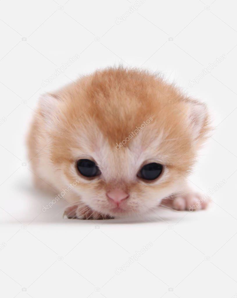 One Little Kitten Stock Photo Aff Kitten Stock Photo Ad In 2020 Little Kittens Kitten Birds In Flight